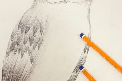 Artzone Senior September Owl Drawing  8-12 y/o